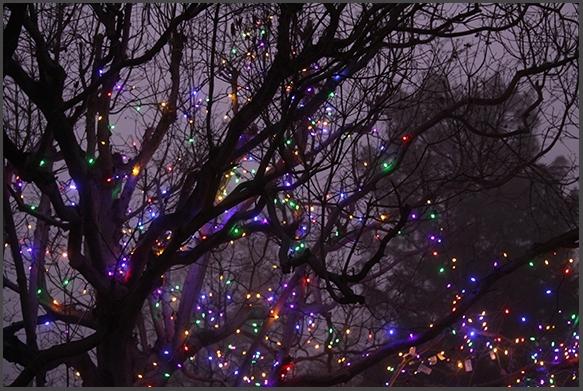 confetti of lights
