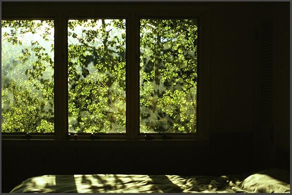 bed of aspen shadows
