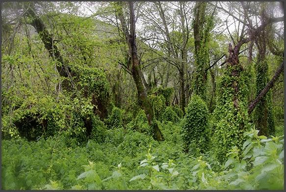 modern forest primeval